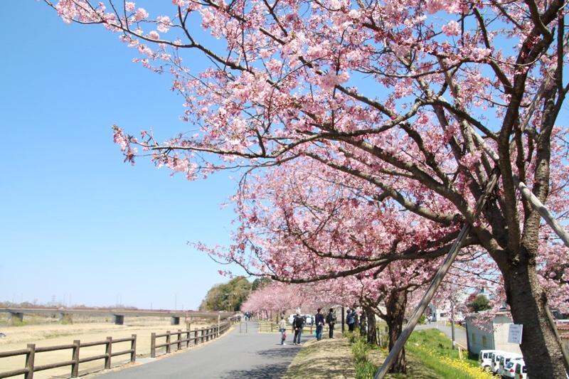 桜もきれいな大沼公園