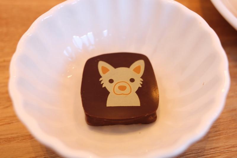 かわいい見た目の犬チョコ!